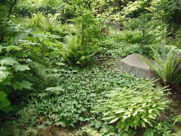 3fcac000f4c800bd47f63d20b2bbdbdd - Gardening With Oregon Native Plants West Of The Cascades
