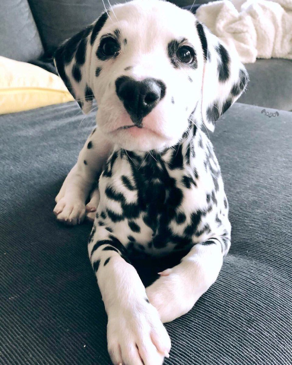 Weratedogs On Cute Animals Cute Baby Animals Dog Rates