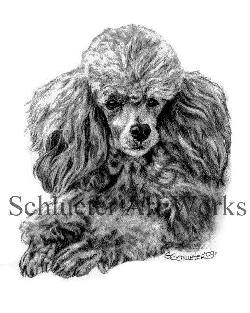 The Poodle Print By Gensart On Etsy 19 00 Poodle Drawing