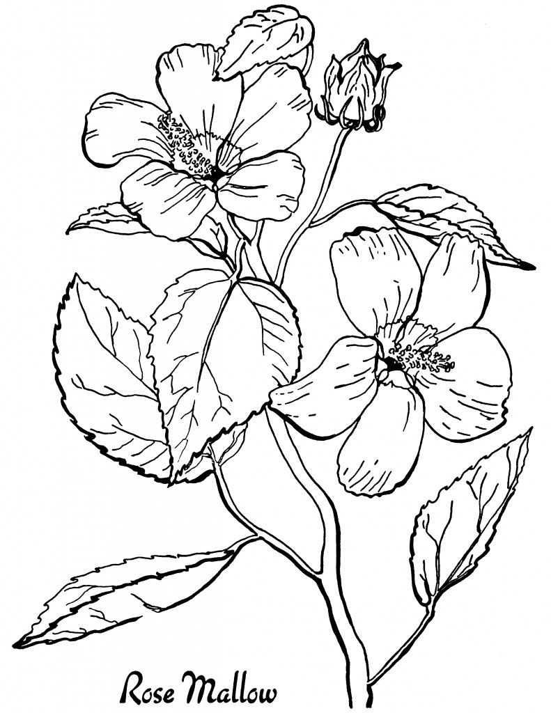 Printable coloring pages for adults flowers - 03 Roses Adult Coloring Pages