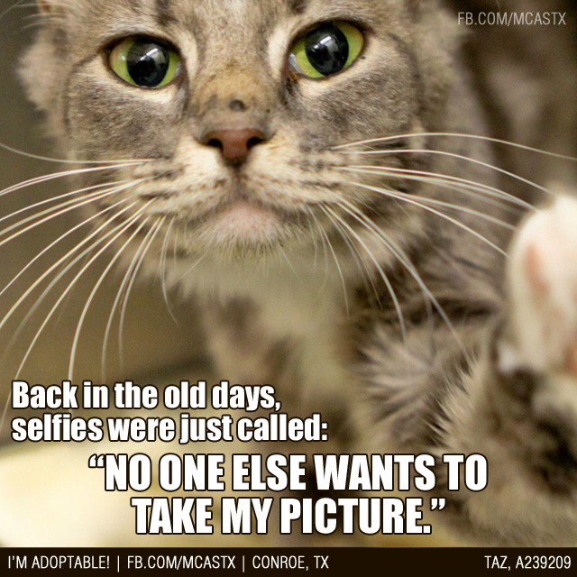 "Maybe selfies should be called ""lonelies""? mcaspets"