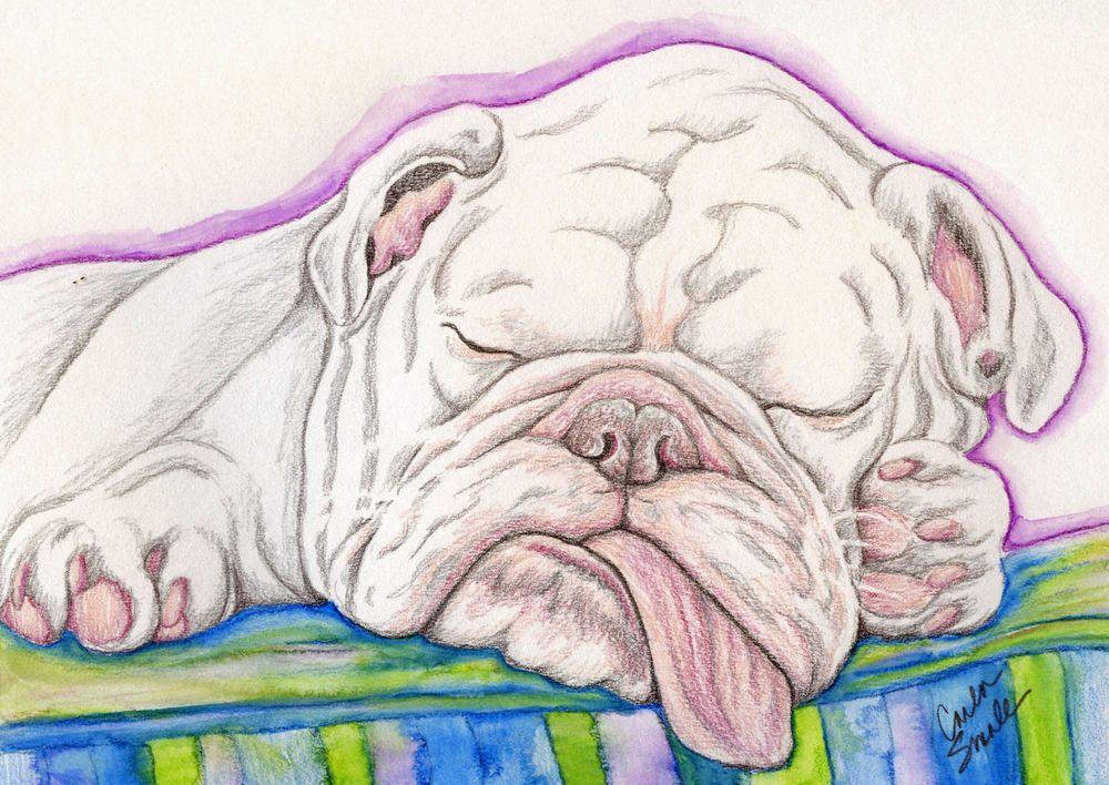 Sleepy English Bulldog Dog Art Original Pencil Drawing Painting