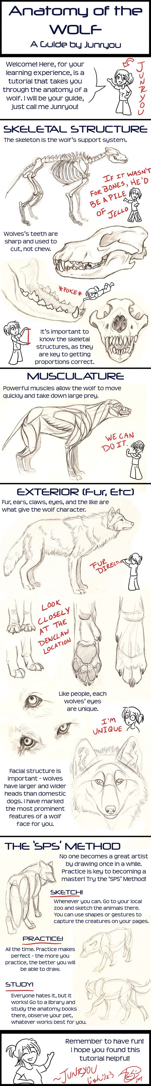 Anatomy of a Wolf - A Tutorial by *Junryou-na-Kokoro on deviantART ...