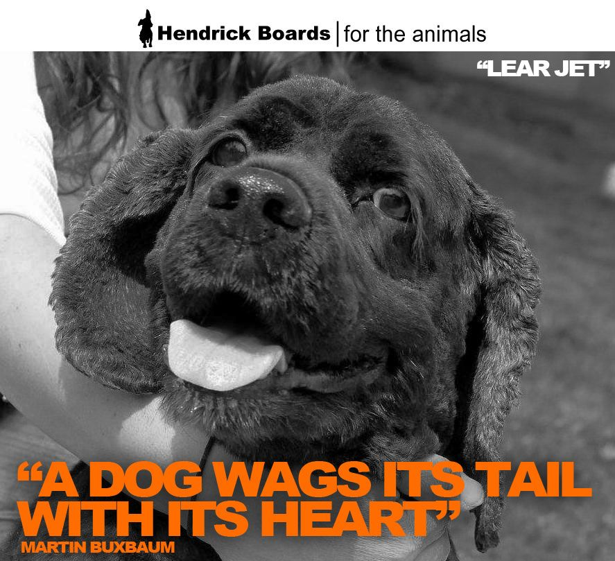 A Dog Wags Its Tail With Its Heart Martin Buxbaum My Name Is Lear Jet And I Can Be Found At Abandoned Angels Cocker Sp Cocker Spaniel Rescue Dogs Animals