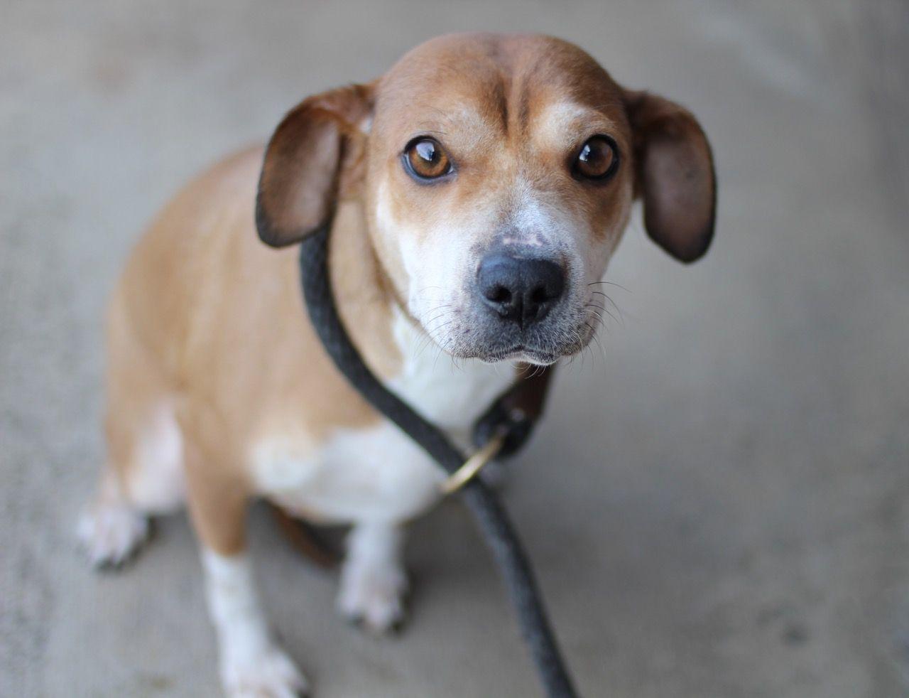 Sharp Eagle Dog For Adoption In El Cajon Ca Adn 433203 On