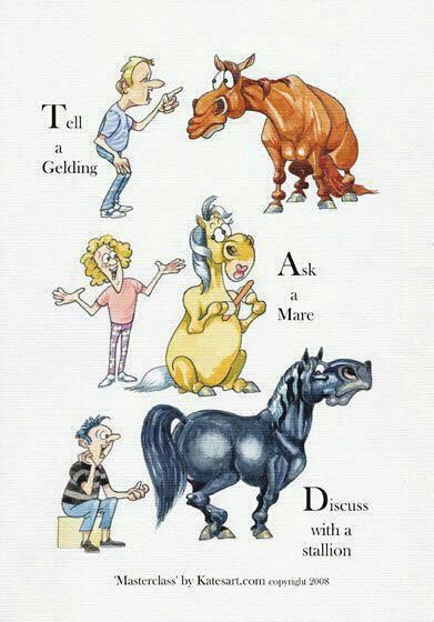 Geldings, Mares & Stallions