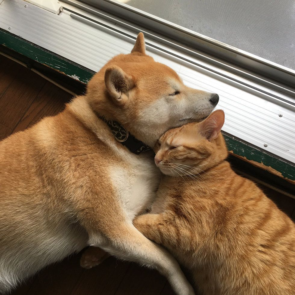Kitten Who Needed a Home Finds New Brother in a Dog Who