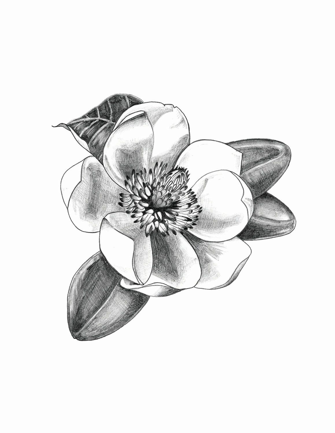 Magnolia Magnolia Tattoo Small Tattoos Girl Rib Tattoos