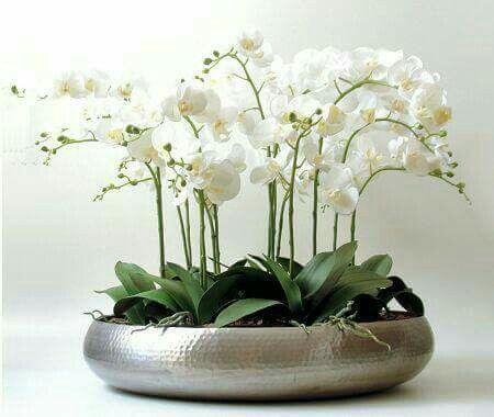 Pin De Negru Cristina Em Plantas Arranjos De Flores Decoracao