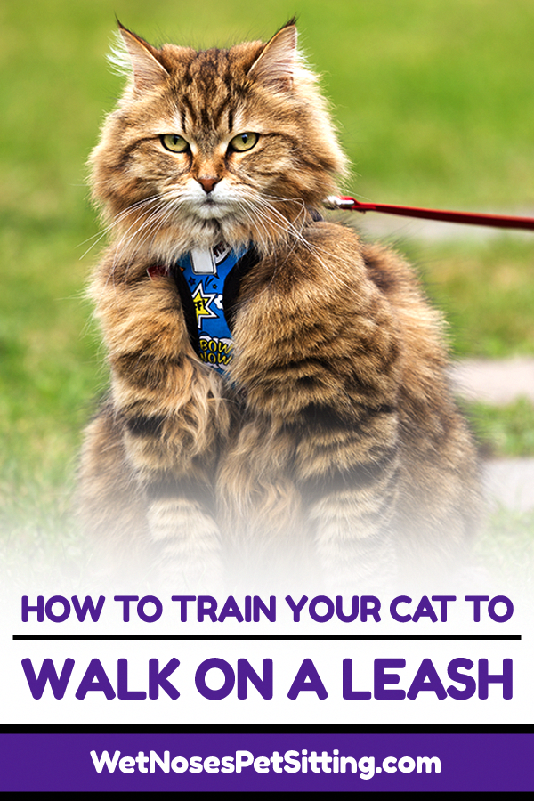 How To Train Your Cat To Walk On A Leash National Walk Your Pet Month Cats Cat Leash Cat Toilet Training