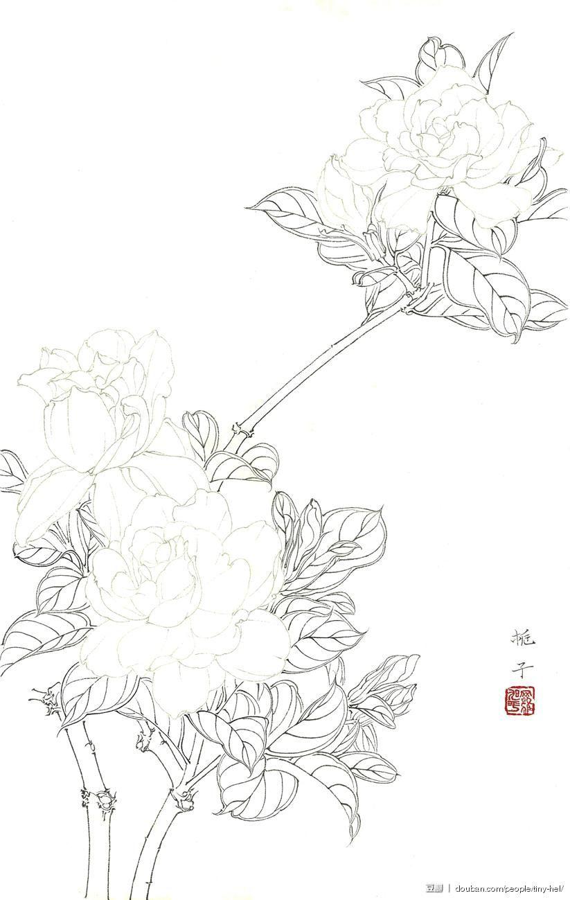 Asian flowers9_ http://www.douban.com/photos/album/118689326/?start ...