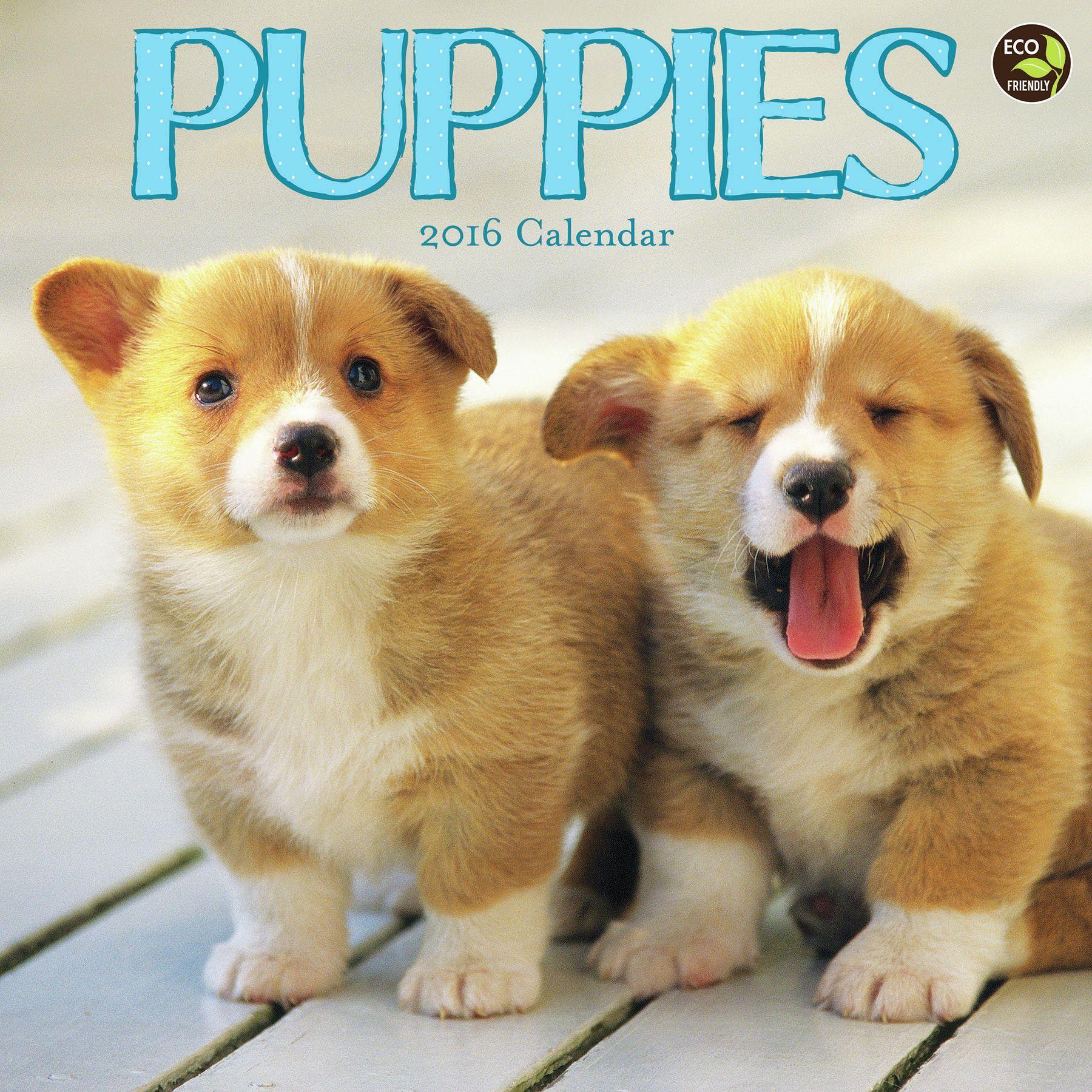 2016 Puppies Wall Calendar
