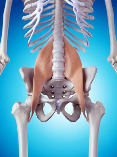 The Psoas muscle | Hip flexibility | Pinterest | Anatomía, Dolor de ...