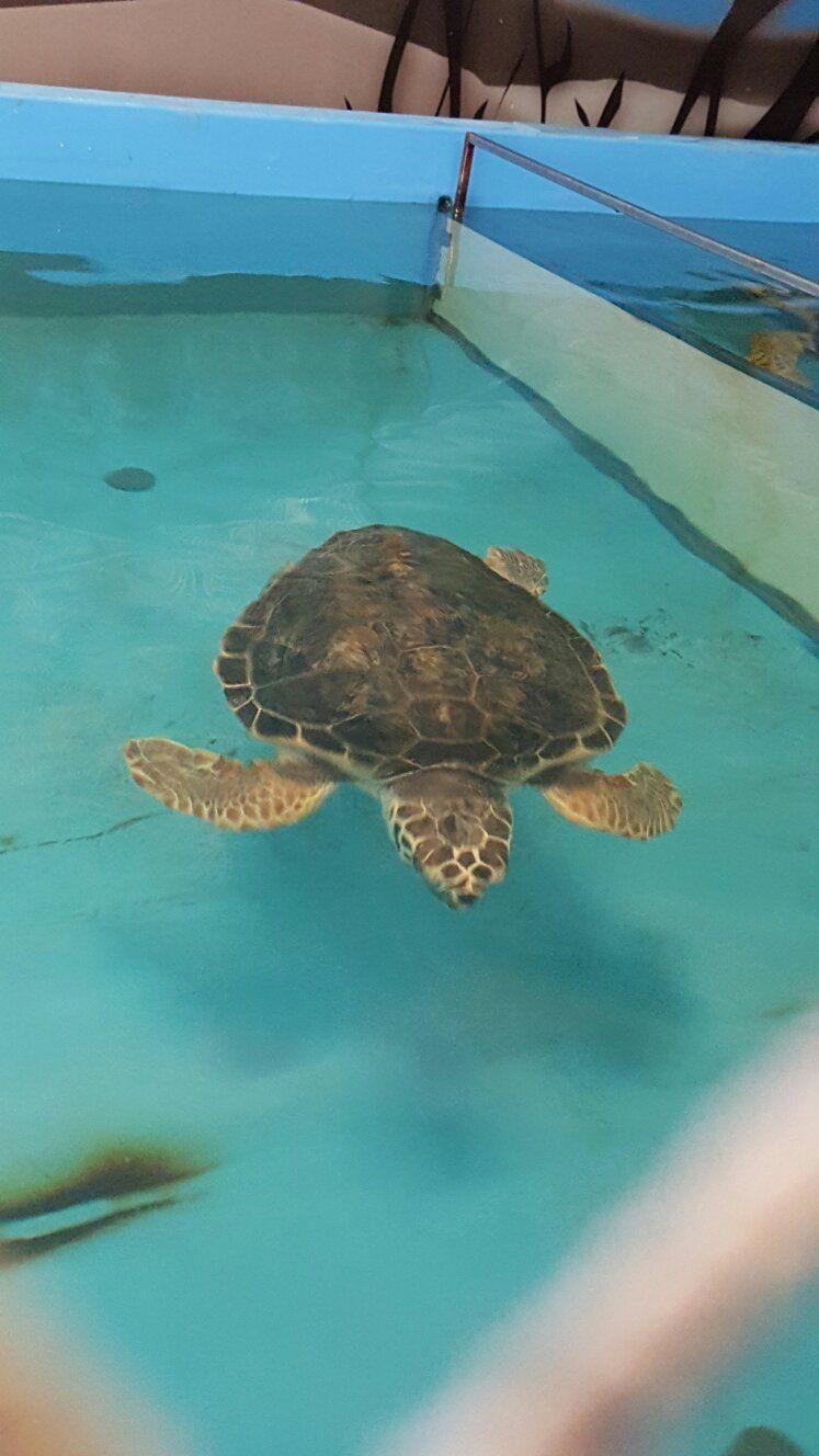 Ospedale Delle Tartarughe Turtle Rehabilitation Riccione