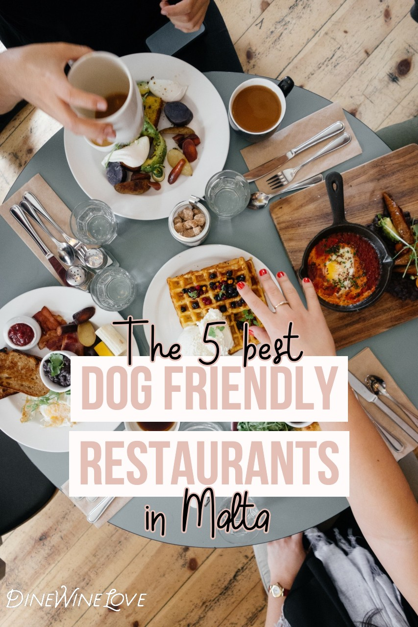 Pin By Anita Fosen On Valletta Malta In 2020 Dog Friends Best Dogs Homemade Dog Treats