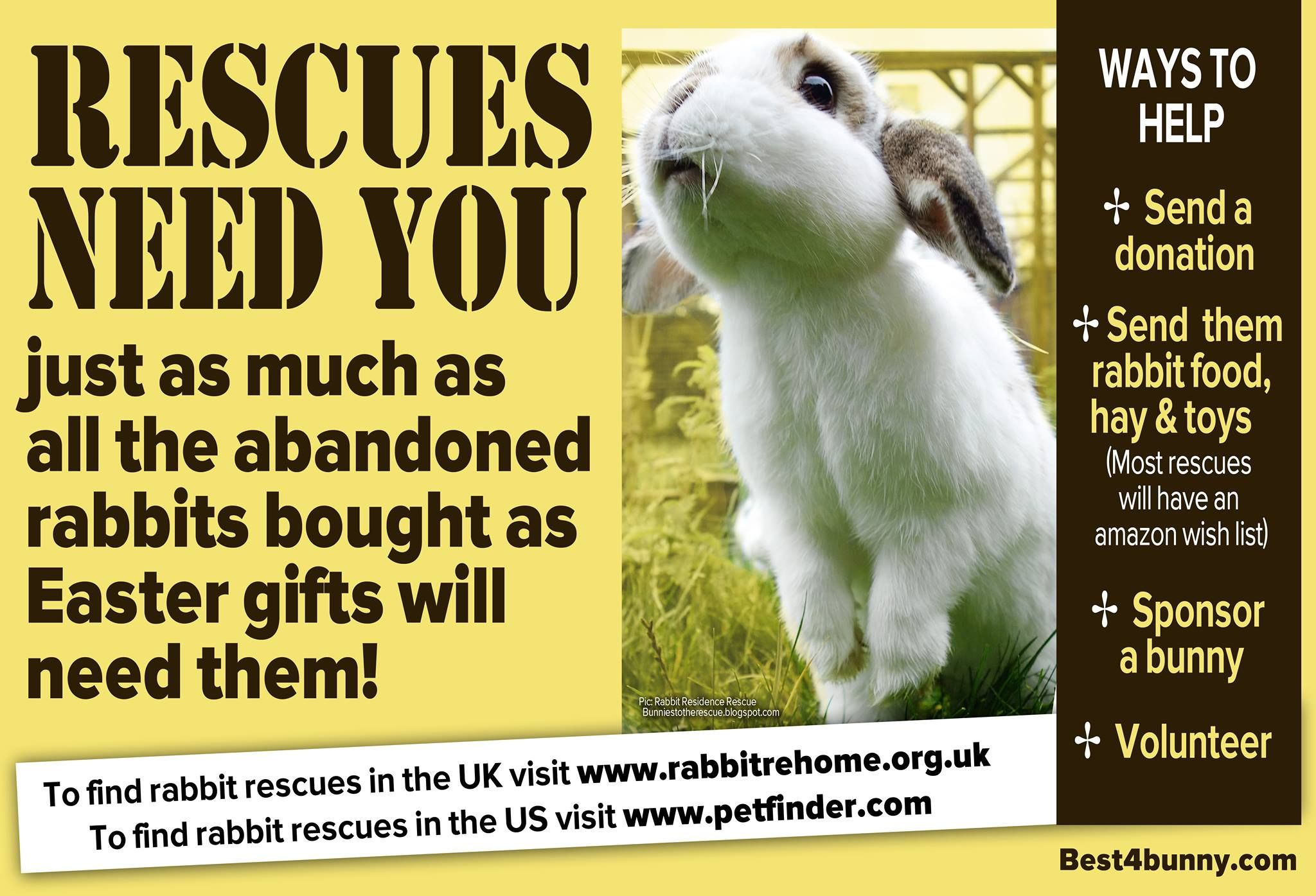 The rescues need you rescues everywhere will soon be inundated with rescues everywhere will soon be inundated with unwanted abandoned bunnies bought as easter gifts they will need all the help they can get negle Choice Image