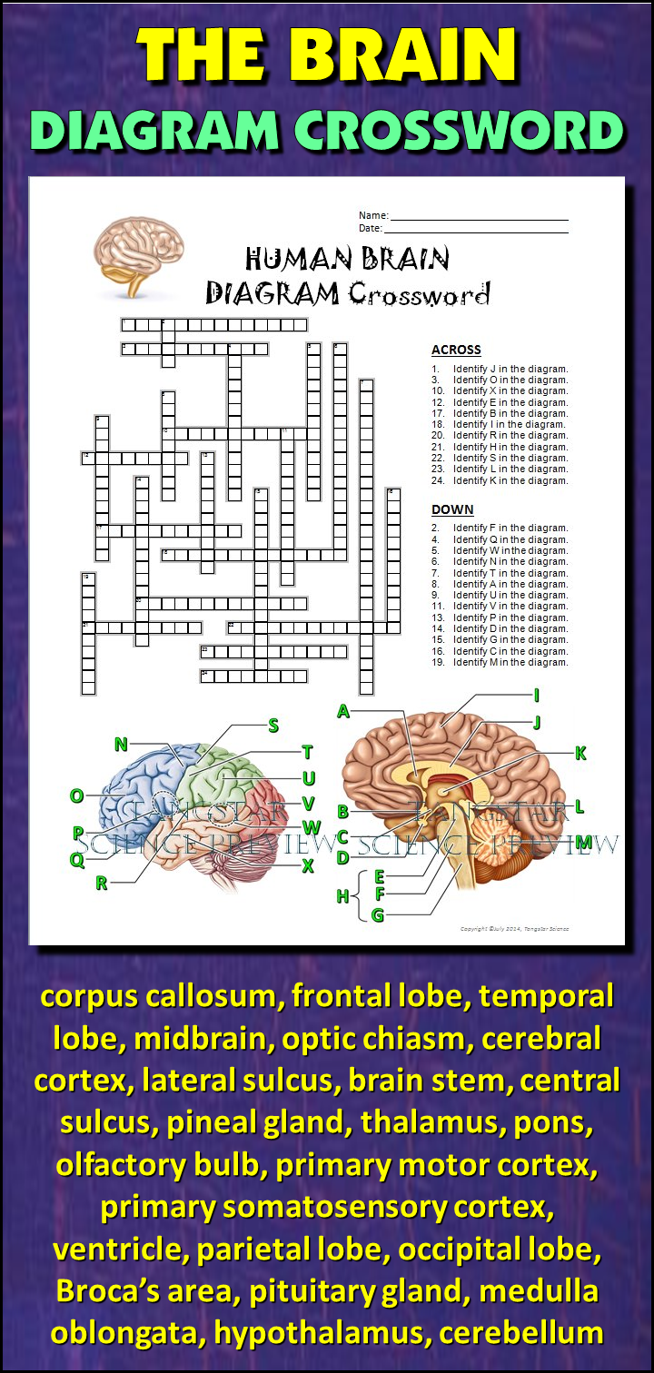 Brain Crossword With Diagram  Editable