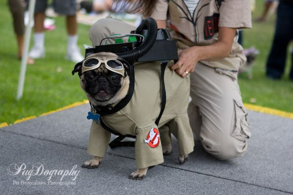 Pug In Ghostbuster Costume For My Pug Loving Friends You Know Who