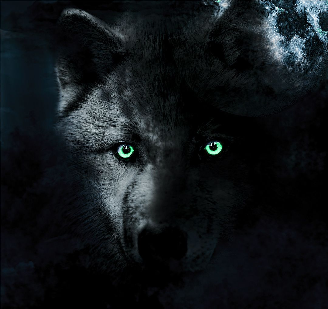 Wolf Green Eyes Wallpaper