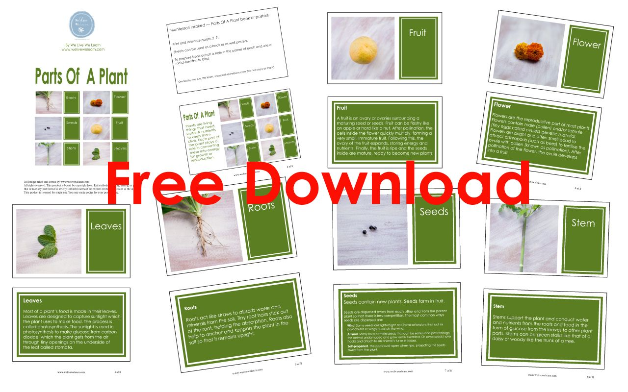 Free Download Montessori Inspired Parts Of A Plant Book