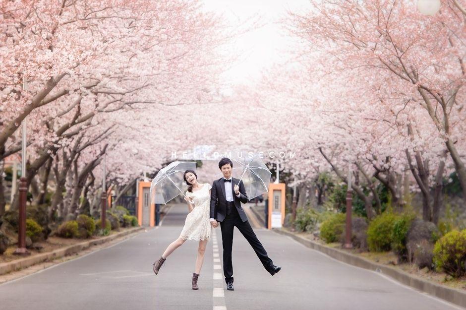 Jeju Cherry Blossom 2019 1 Cherry Blossom Cherry Blossom Festival Blossom