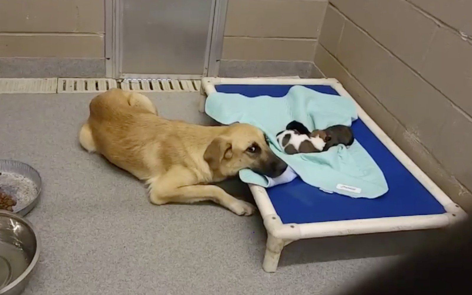 This Worried Mama Dog Anxiously Watching Over Her Puppies In Crowded Shelter Shows Exactly Why We Need To Adopt And Not Shop Video Dog Thoughts Dogs Puppies