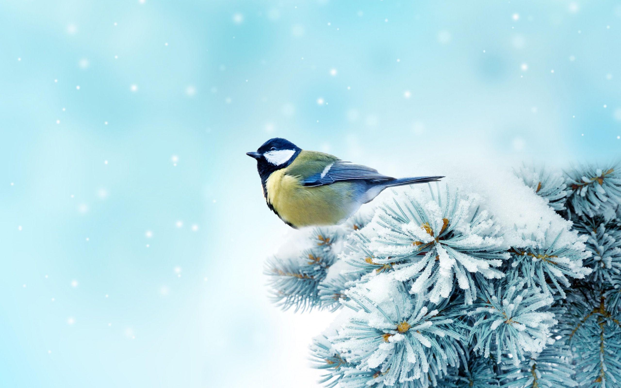 Yellow Snow Bird Winter Snow Wallpaper Bird Wallpaper Birds
