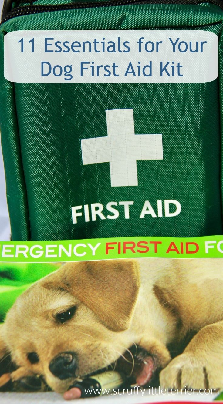 11 Essentials For Your Dog First Aid Kit Scruffy Little