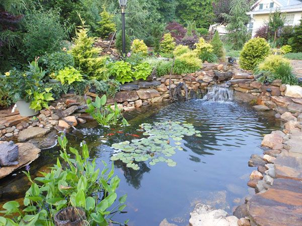 Backyard koi ponds and waterfalls pond construction for Garden pond design and construction