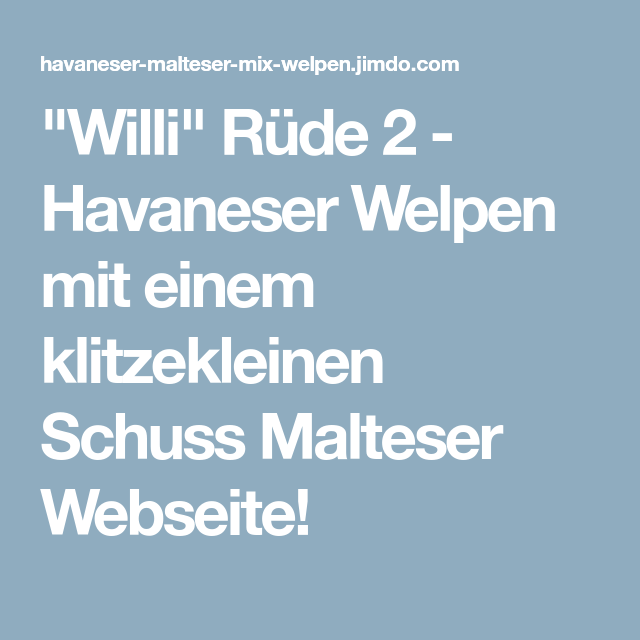 Willi Rude 2 Havaneser Welpen Mit Einem Klitzekleinen Schuss