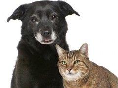 Incontinência urinária afeta cães e gatos