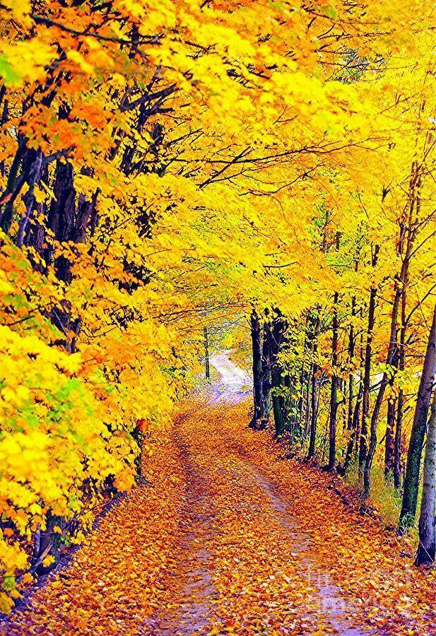 Pin by Gia Haygood on AUTUMN Autumn scenery, Autumn