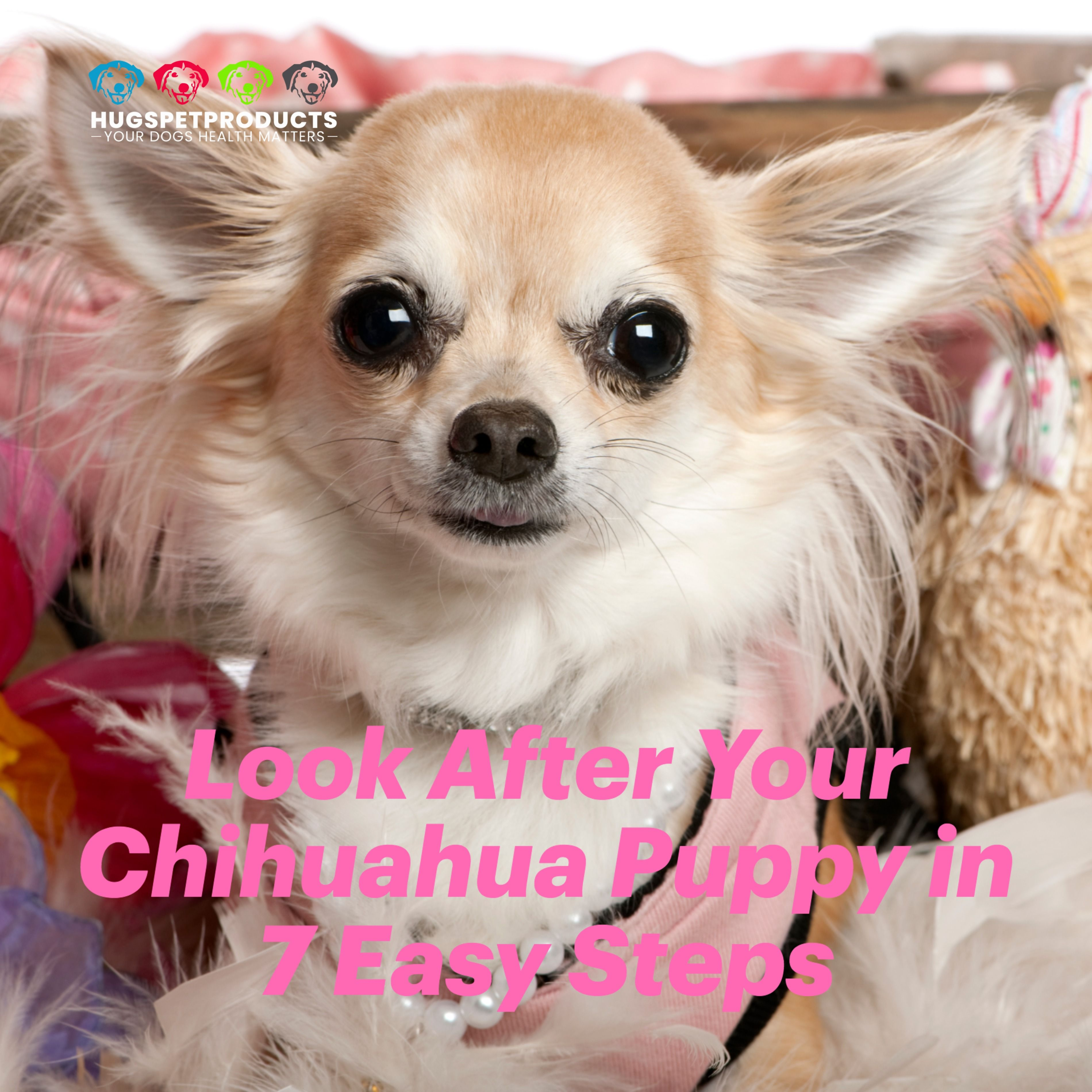 Look After Your Chihuahua Puppy In 7 Steps Chihuahua Puppies