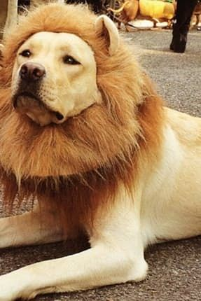 The 38 Best Dog Halloween Costumes Of All Time Halloweenie Big
