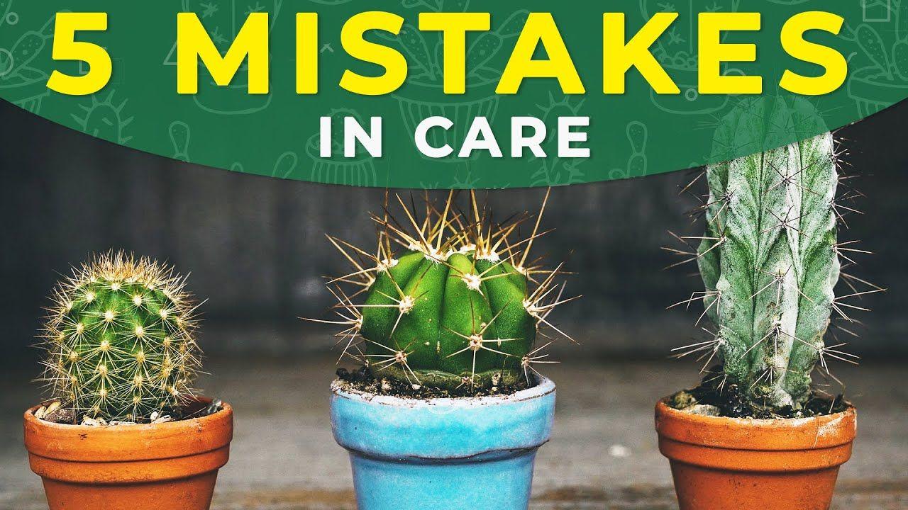 5 common mistakes in cactus care cactus care cactus