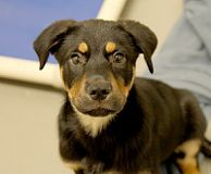 Kanton - SPCA of Texas (Dallas)