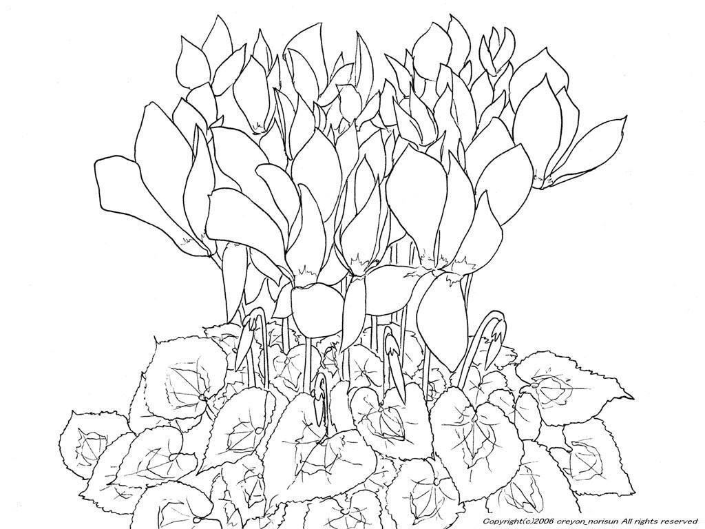 シクラメンの下絵冬の花のぬりえ раскраски