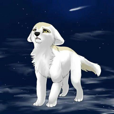 Photo of Anime wolf
