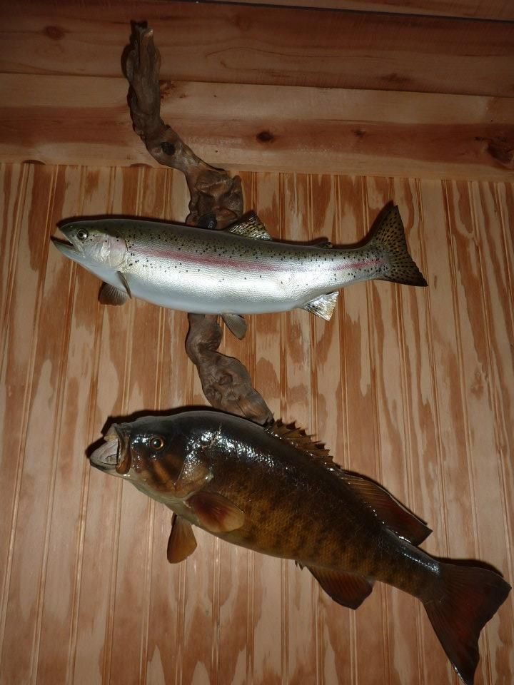trout and bass tucson taxidermy our work tucson taxidermy