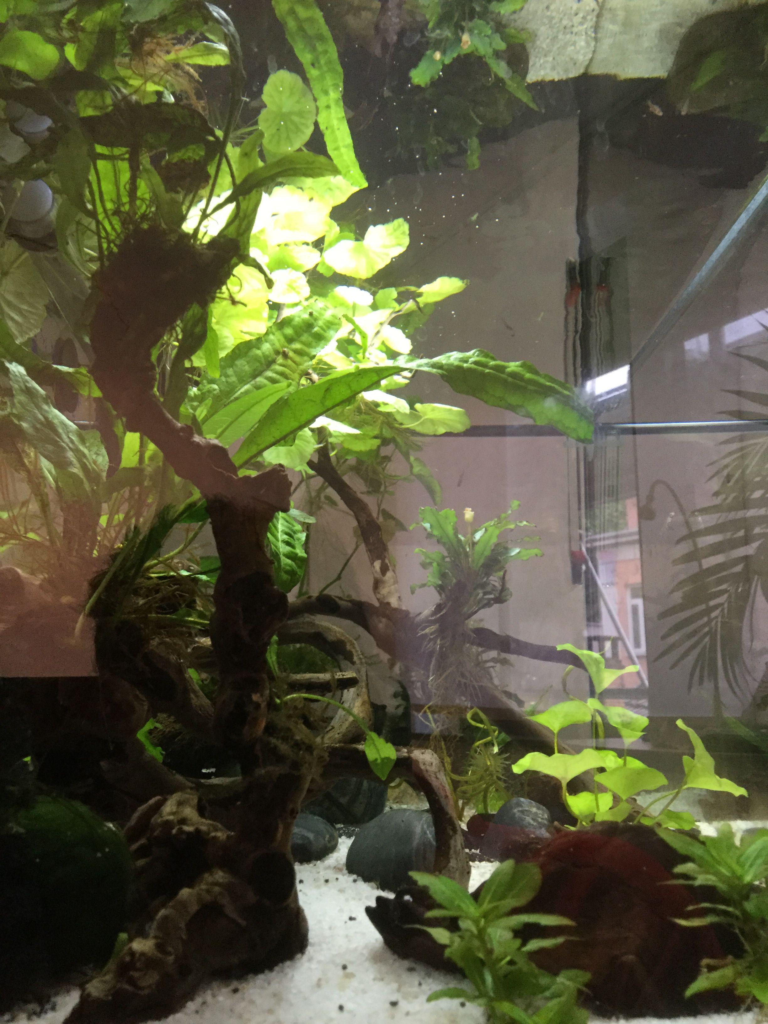 Pin by marlize oberholster on akwarium goed pinterest aquariums