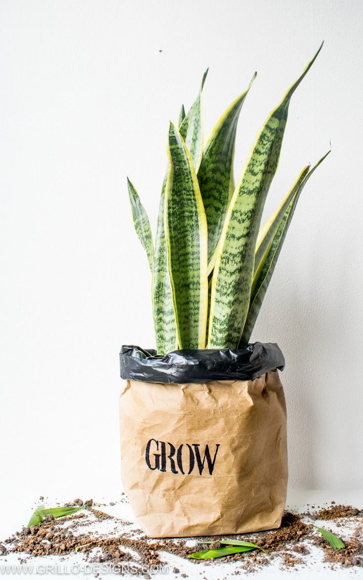 DIY Kraft Paper Planter Bag Tutorial Planter bags, Plant