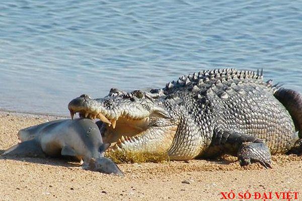 Nằm mơ thấy cá sấu là điềm gì