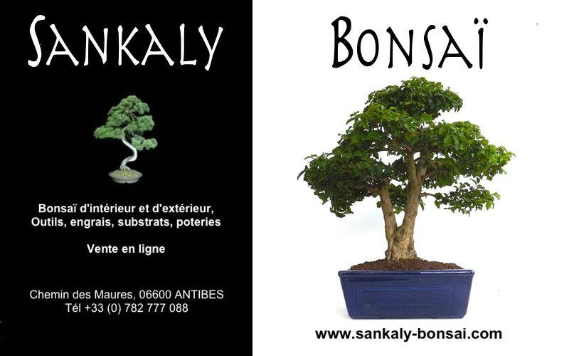 pingl par sankaly bonsa sur vente de bonsa pinterest bonsa bonsai interieur et bonsai. Black Bedroom Furniture Sets. Home Design Ideas