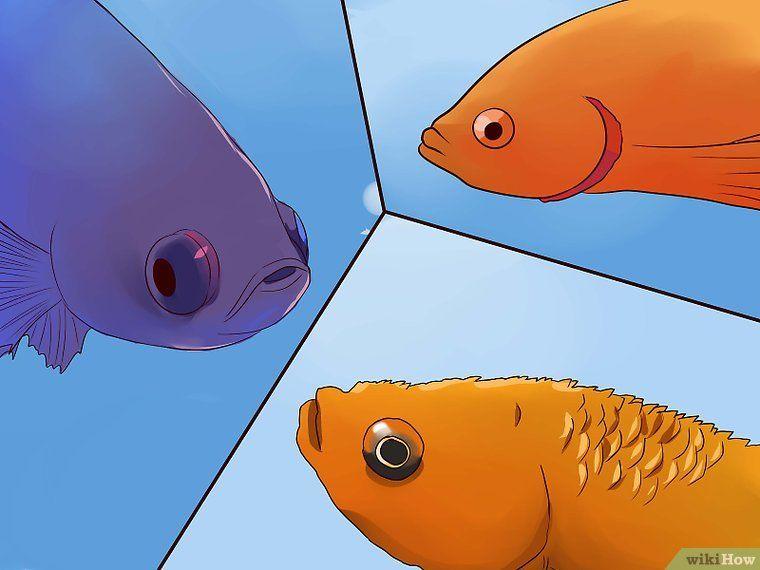 tell if a betta fish is sick pez beta pez beta