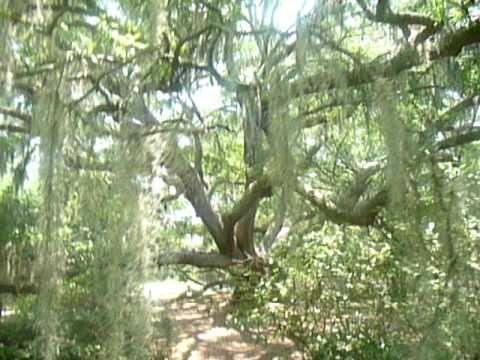 Oak Alley Plantation, Louisiana | San Diego Reader