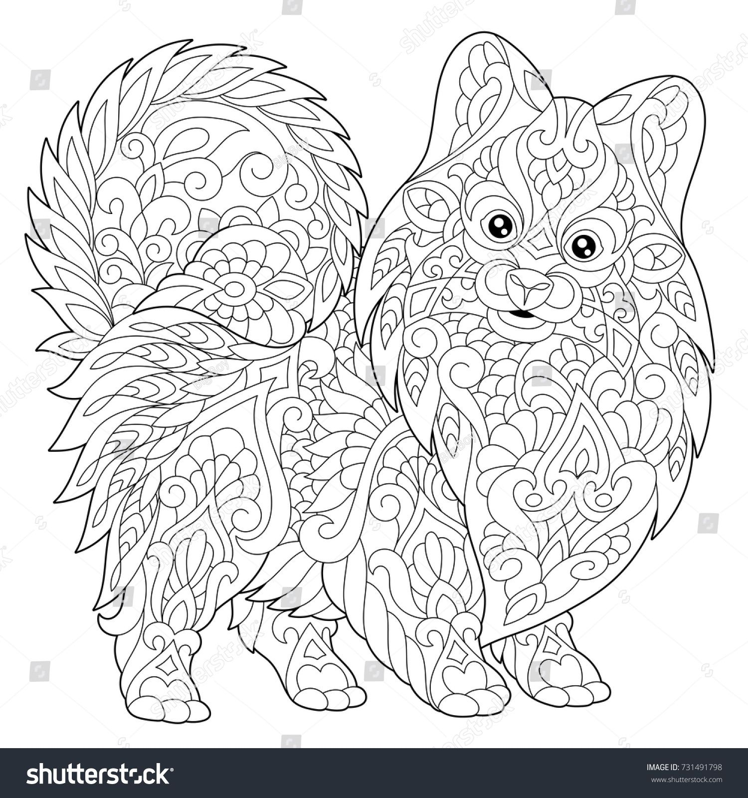 Coloring page of pomeranian dog