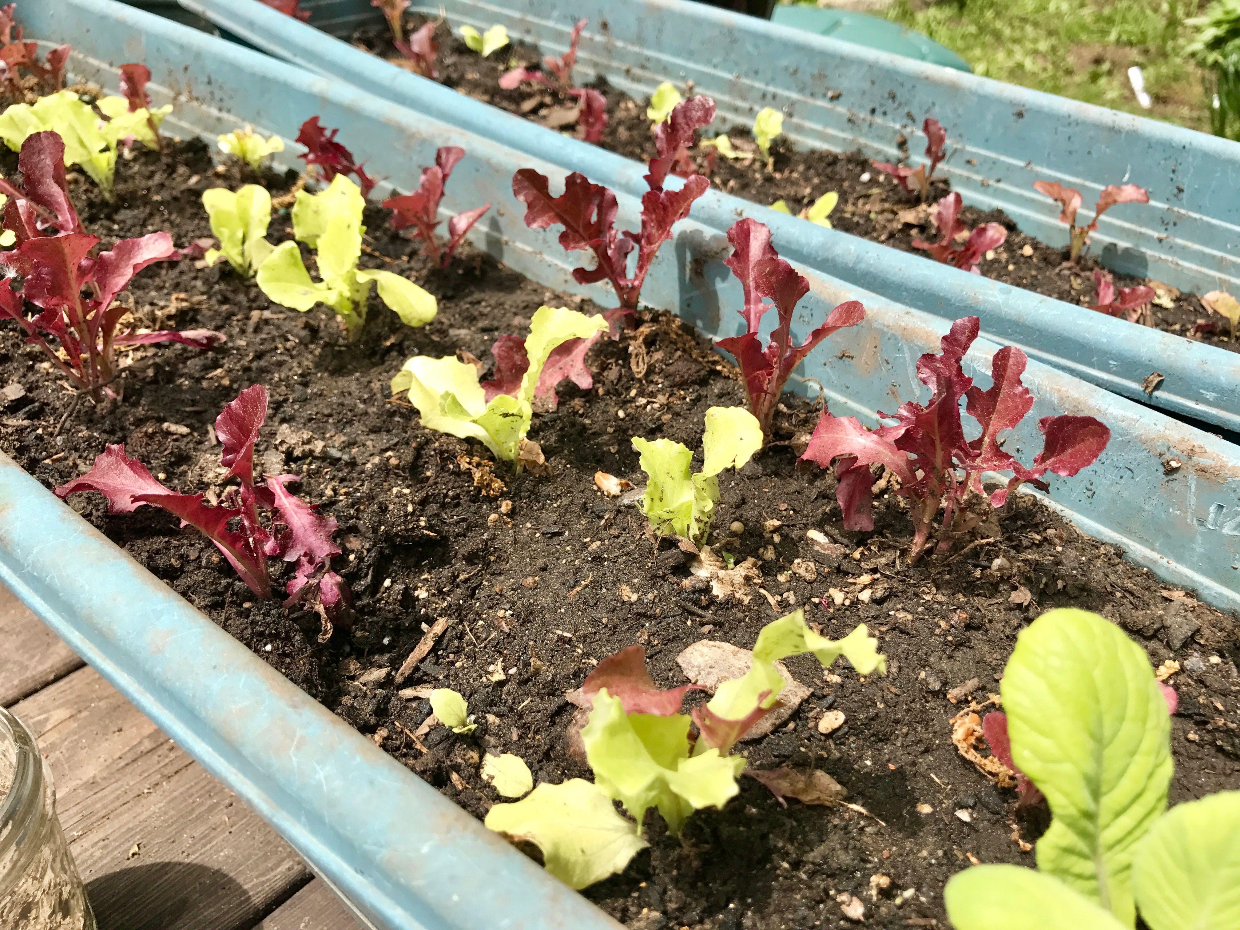 Garden Update: Veggie Garden Trials | Divine Exterior Design ...