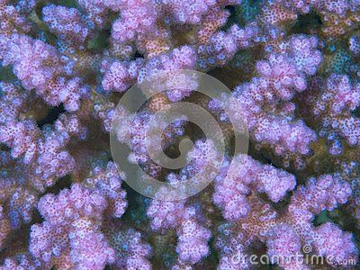 Coral Texture - Download From Over 37 Million High Quality Stock Photos, Images, Vectors. Sign up for FREE today. Image: 31092537