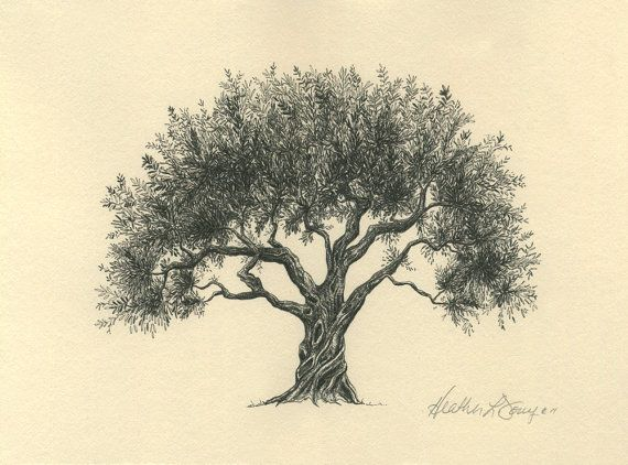 A tattoo of an olive tree with olivia written in the roots for Cute tree drawing
