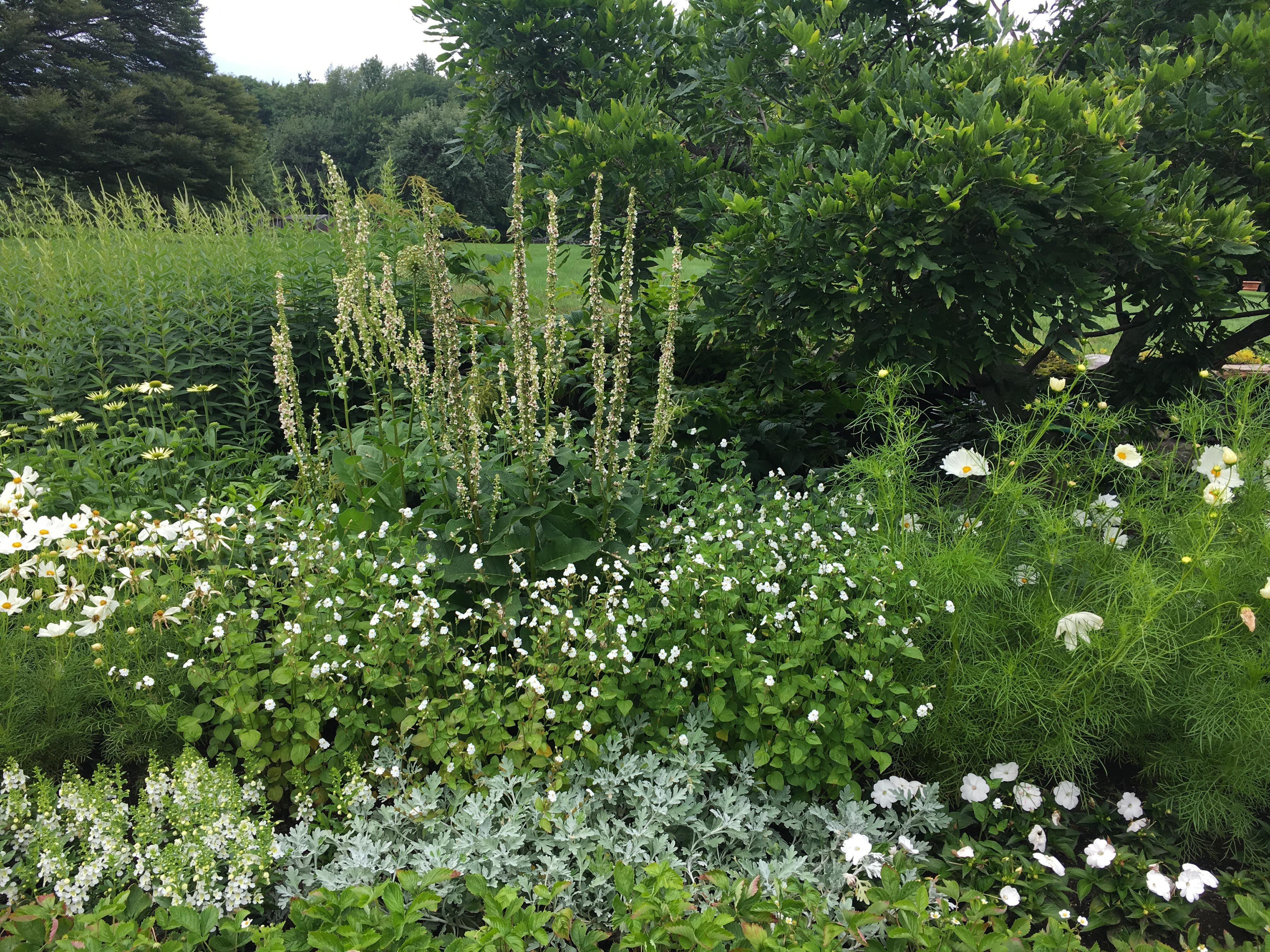 The white perennial border moon garden at white flower farm the white perennial border moon garden at white flower farm more at thinkingoutsidetheboxwood mightylinksfo